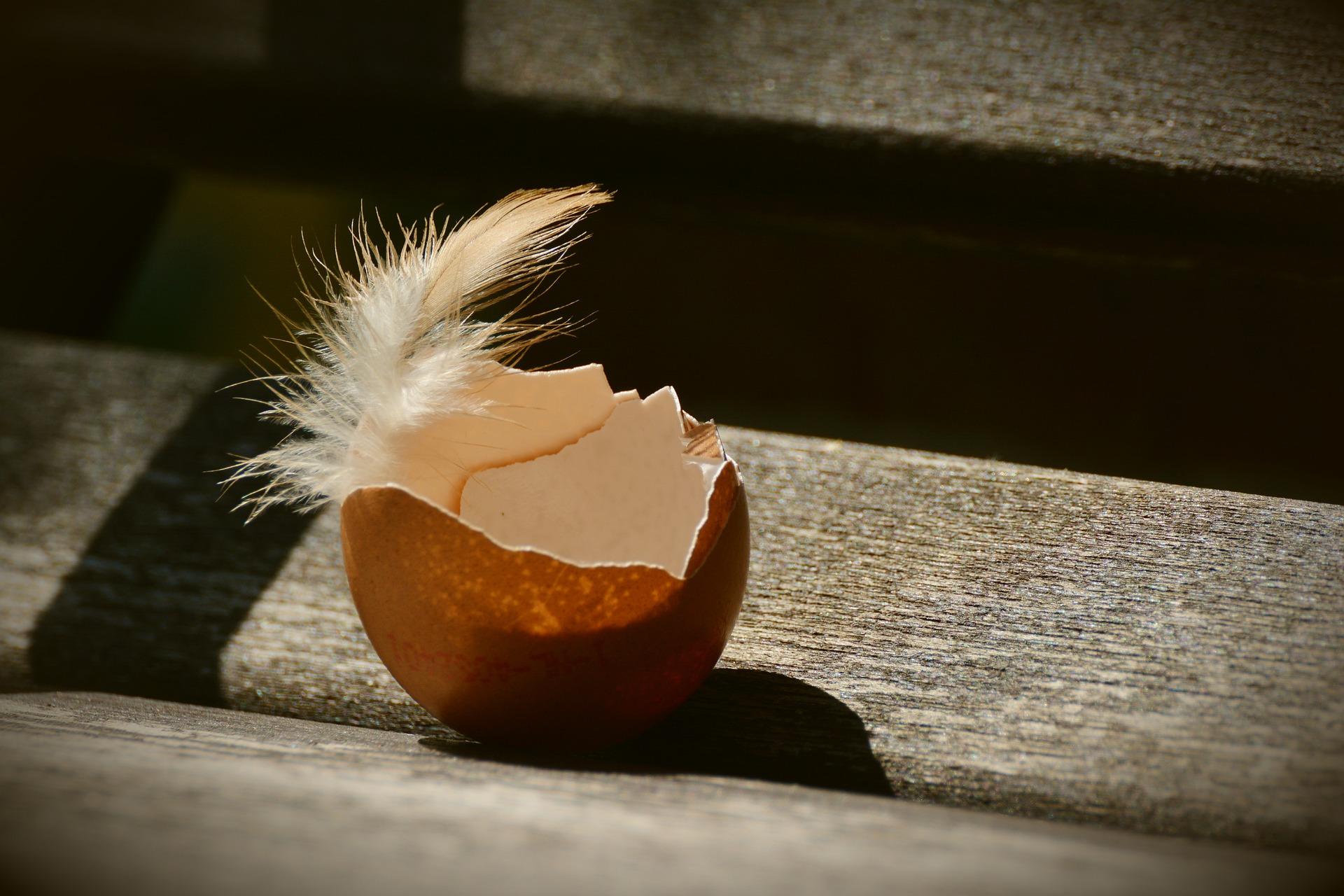 C'è un tesoro nel guscio d'uovo